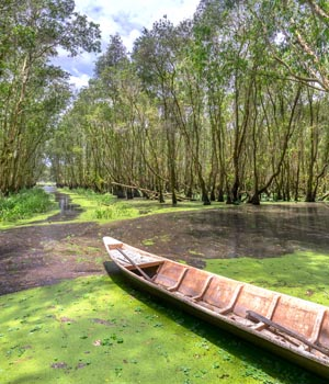 can_gio_mangrove_forest-1